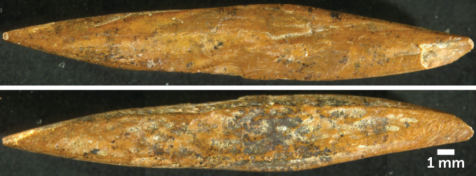 bone point from Sri Lanka