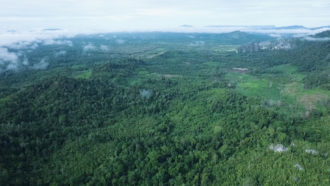 Indonesia forest
