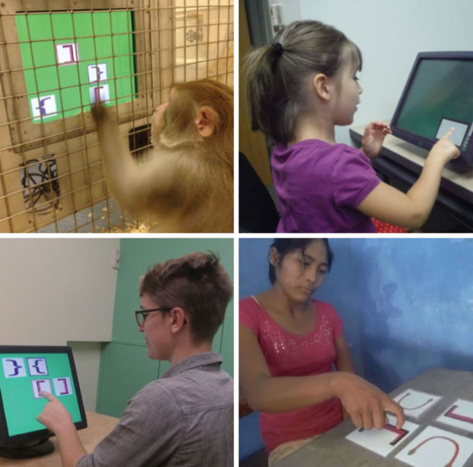 monkey and people taking test
