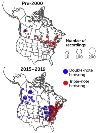 map of the spread of the white-throated sparrow's song, 2000 to 2019