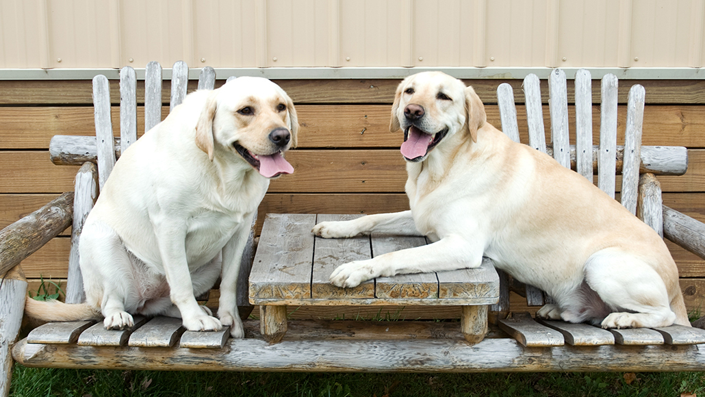 Calculating A Dog S Age In Human Years Is Harder Than You Think Science News