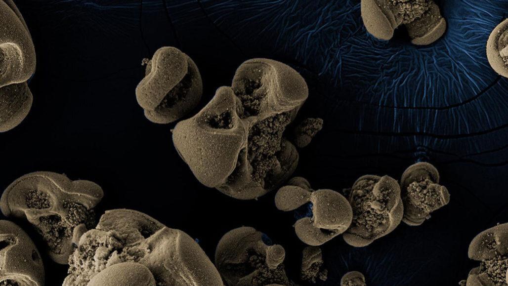 Bacteria that eat manganese