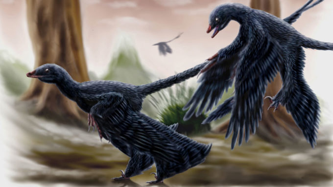 Illustration of what Microraptor looked like