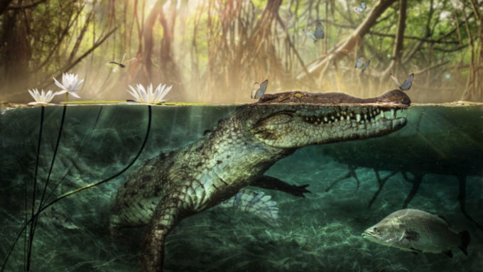 Crocodylus checchiai illustration