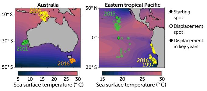 Thermal displacement of marine species due to ocean heat waves, 1982–2019