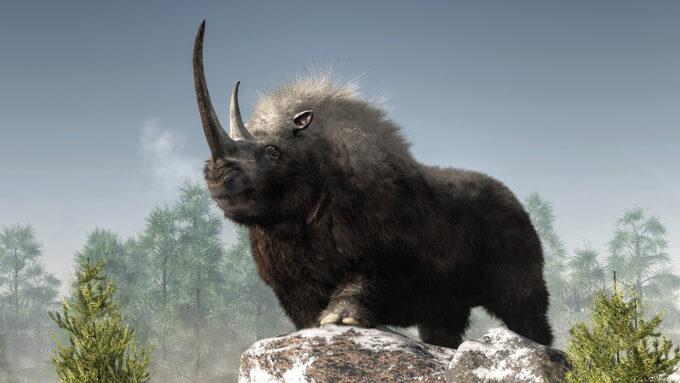 illustration of a woolly rhino