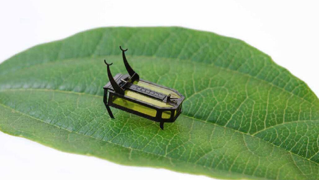 robotic beetle on a leaf