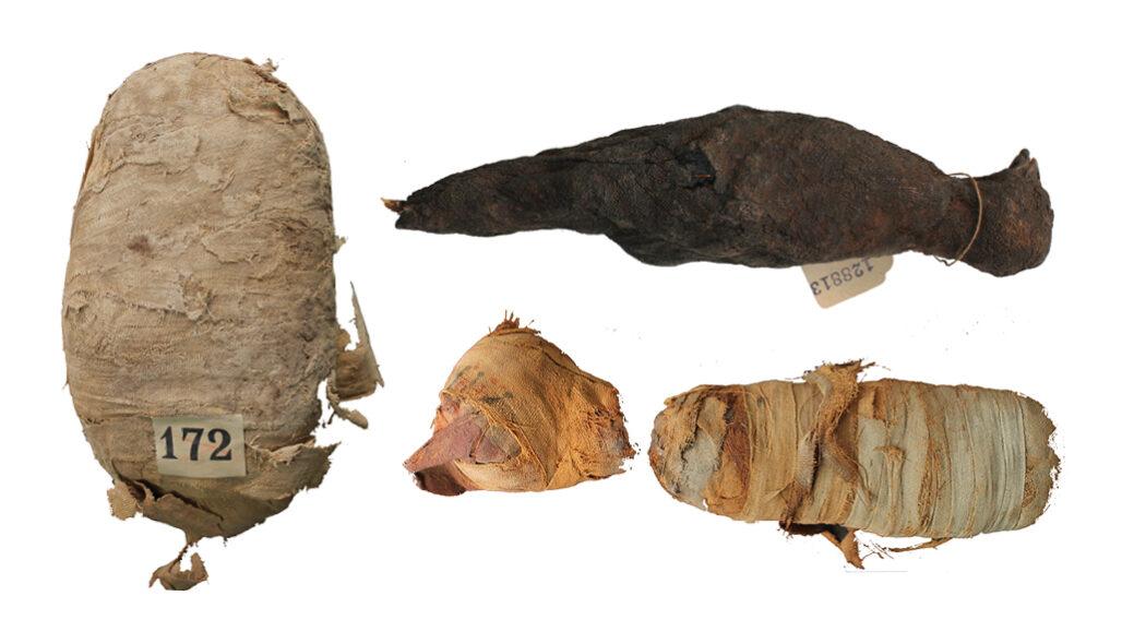 photos of three mummified animals