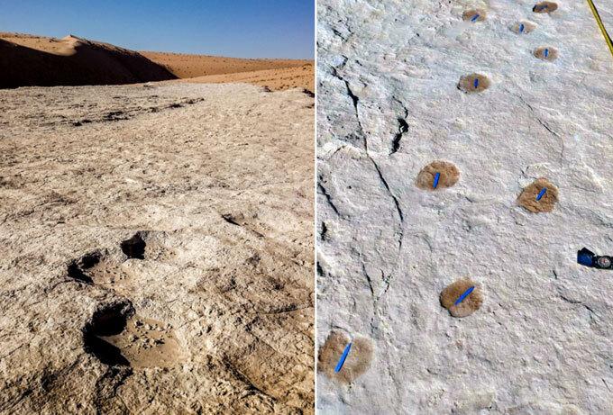 Elephant and camel footprints in Saudi Arabia
