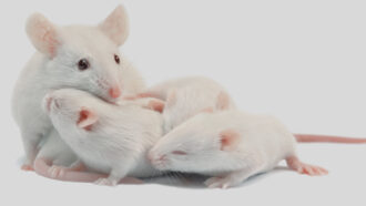 Mouse mom with pups