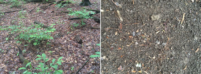 Forest leaf litter before and after jumping worm activity