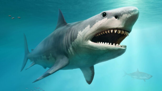 Megalodon shark illustration