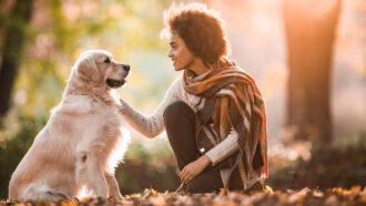 dog looking at human