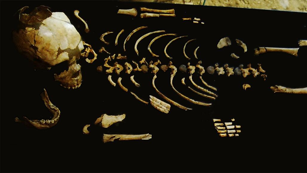 Neandertal partial skeleton