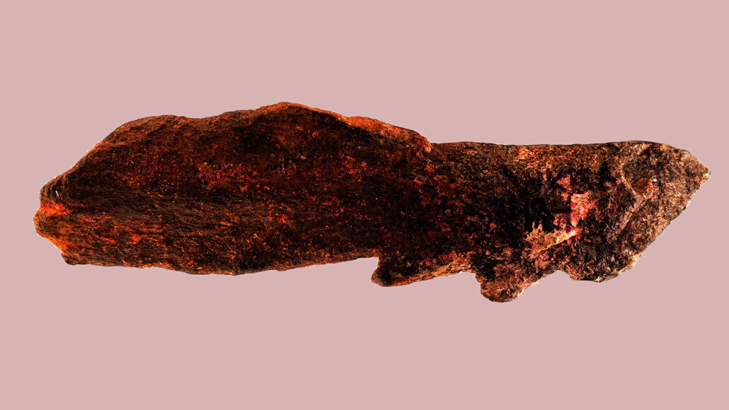 Homo erectus, not humans, may have invented the barbed bone point