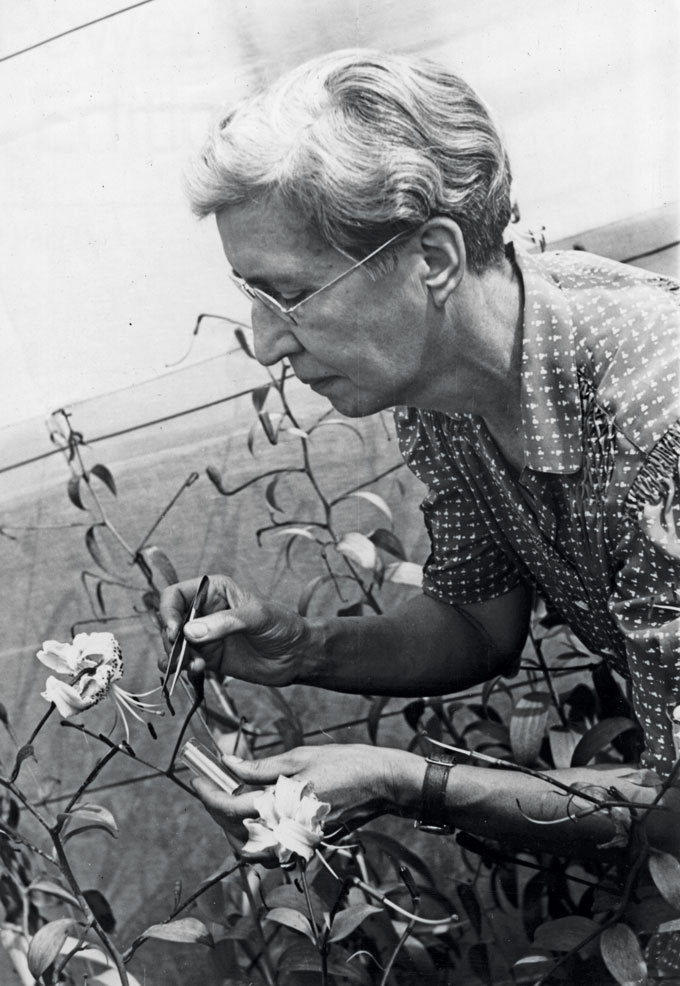 a black and white photo of Norma Etta Pfeiffer examining some lillies
