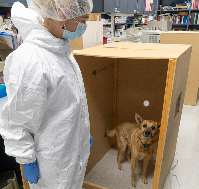scientist with dog in lab experiment