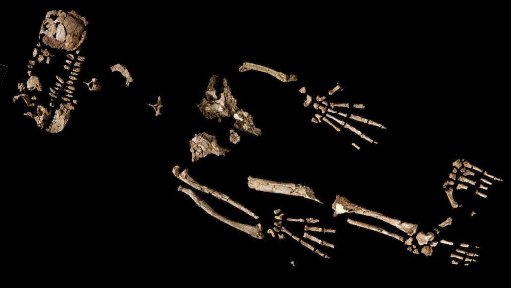 Ardi skeleton