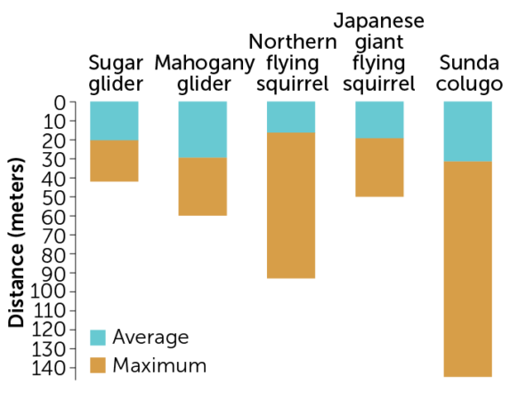 graph of the gliding distances of different mammals