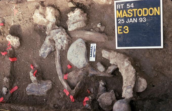 huesos de mastodonte