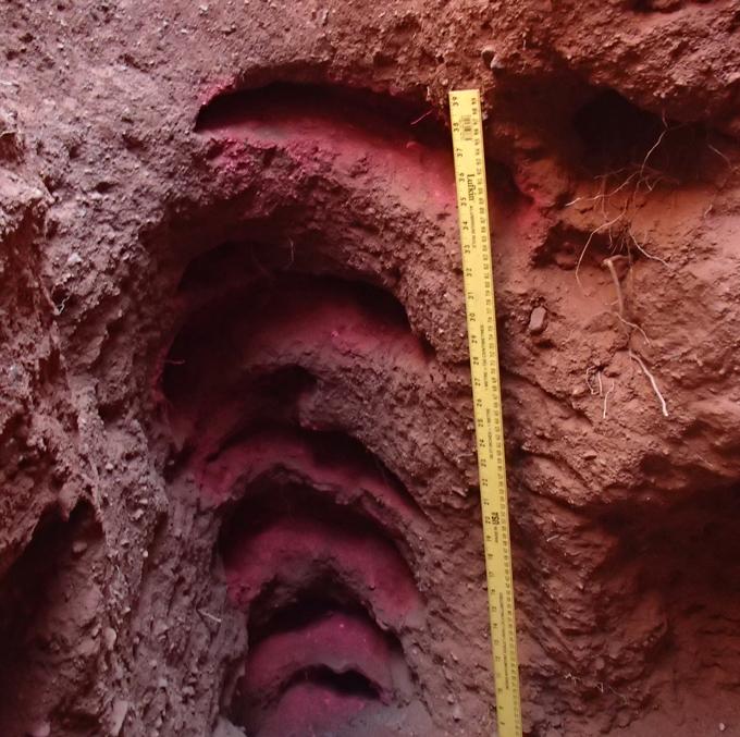 nesting hol van een zand goanna