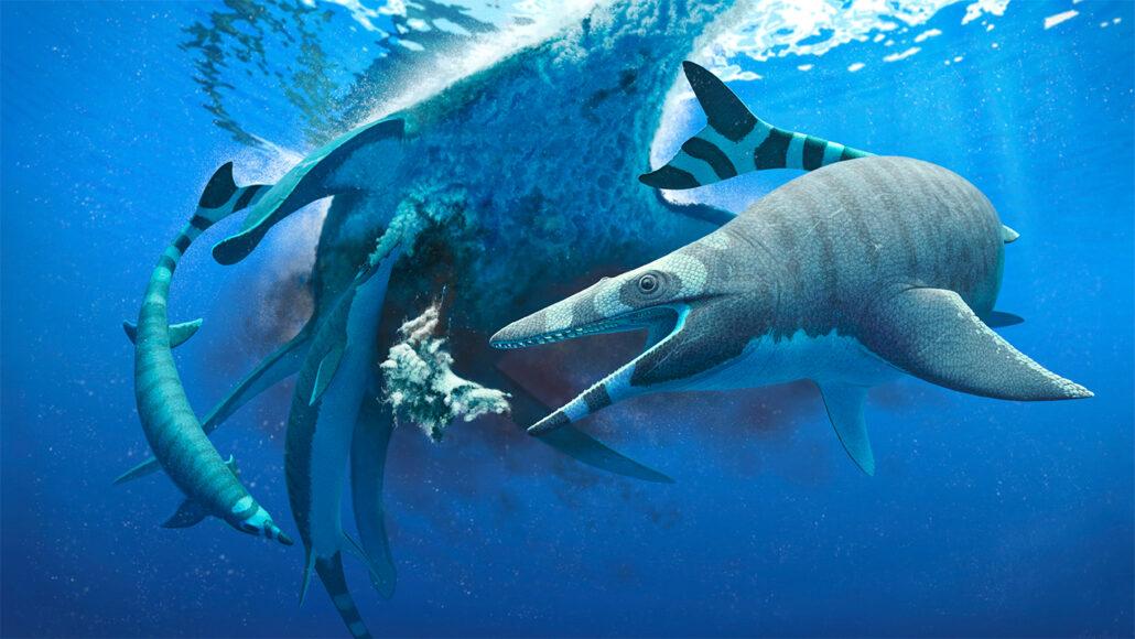 mosasaur Xenodens calminechari scavenging a plesiosaur carcass