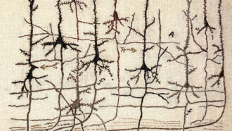 embroidery of pyramidal neurons