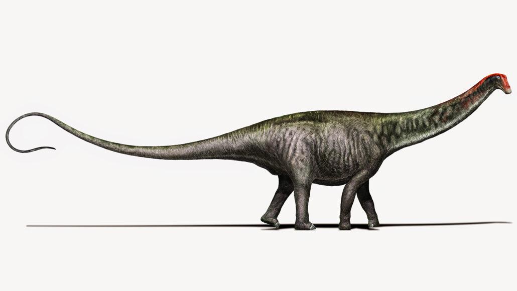 an illustration of a Brontosaurus