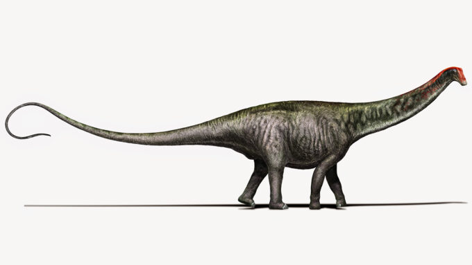 an illustration of a Brontosaurus