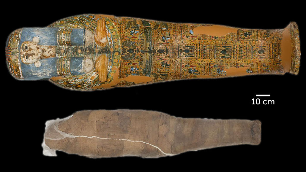 ancient Egyptian mummy sarcophagus and mud shell