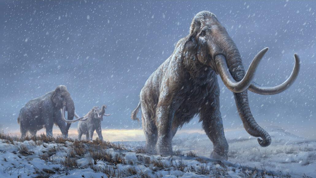 illustratie van steppe mammoeten
