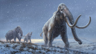 illustration of steppe mammoths