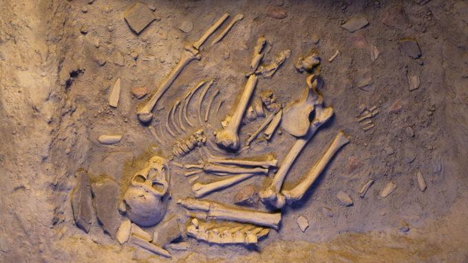 neandertal skeleton