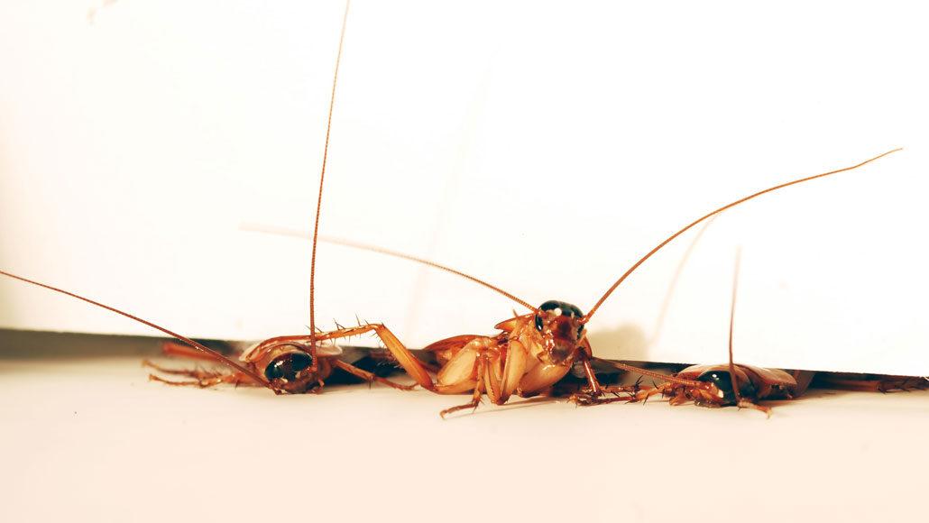 cockroaches wriggling under a door