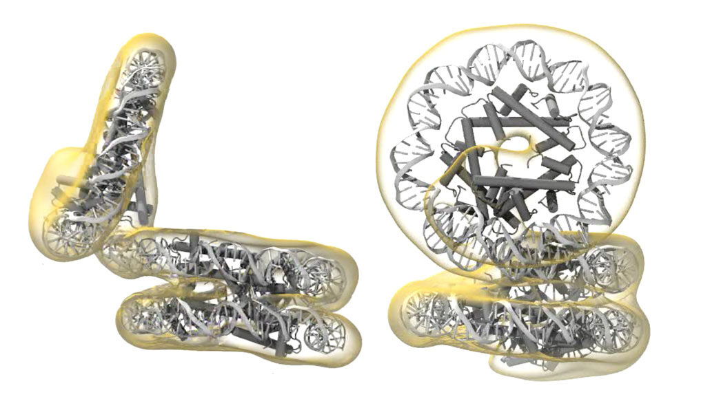 illustration of slinky structures in archaea dna