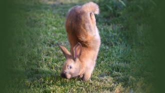 rabbit standing on front paws