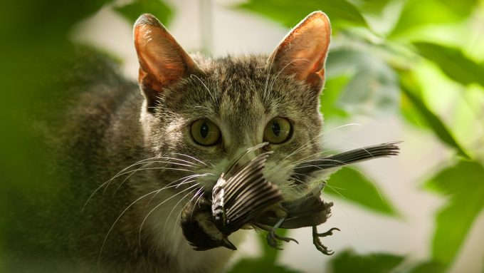 a cat with a bird in its mouth