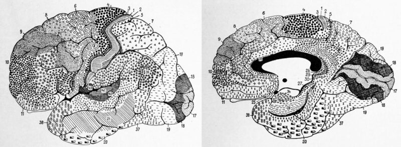 black and white sketches of the brain with numbered sections