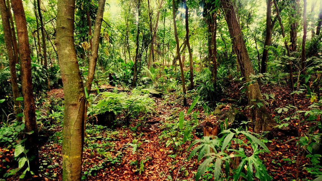 tropical rainforest in Colombia
