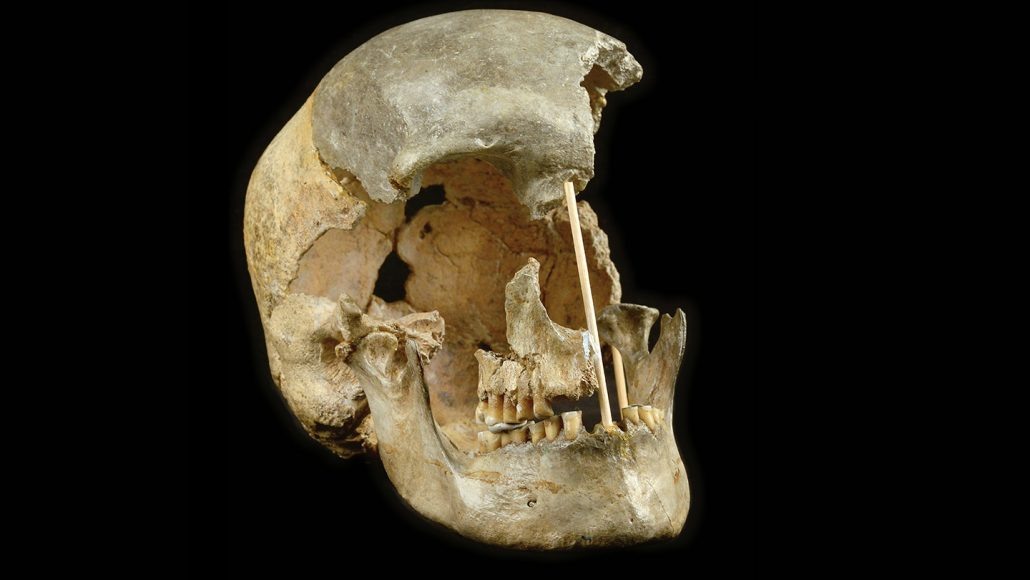 human skull from early humans in Europe