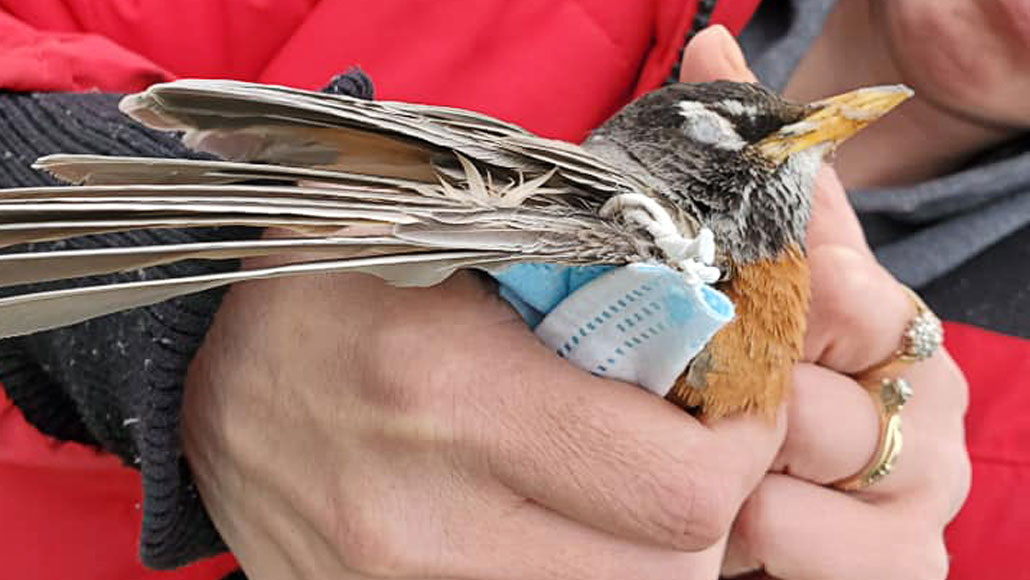 person holding bird with mask caught on its wing