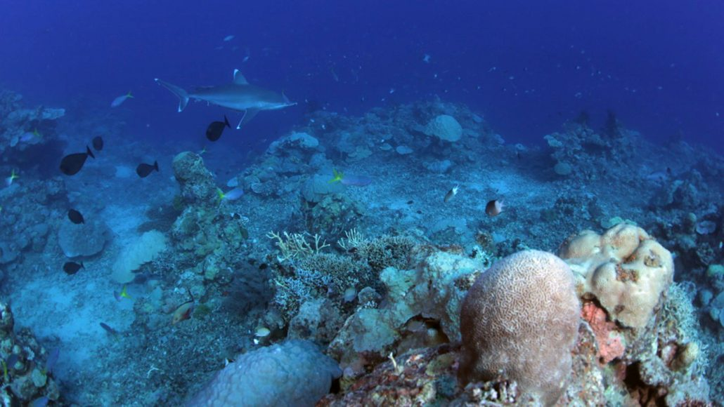 fish swimming by coral reef
