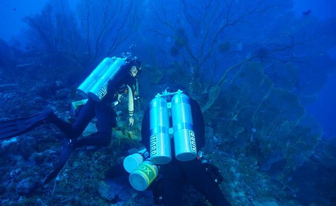 marine biologists scuba diving