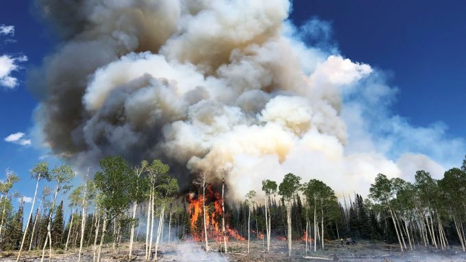 aspen trees burning in a prescribed burn at Fishlake National Forest