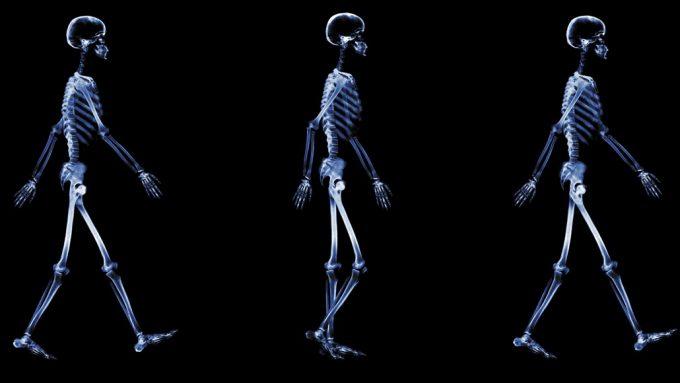 Series of walking skeletons