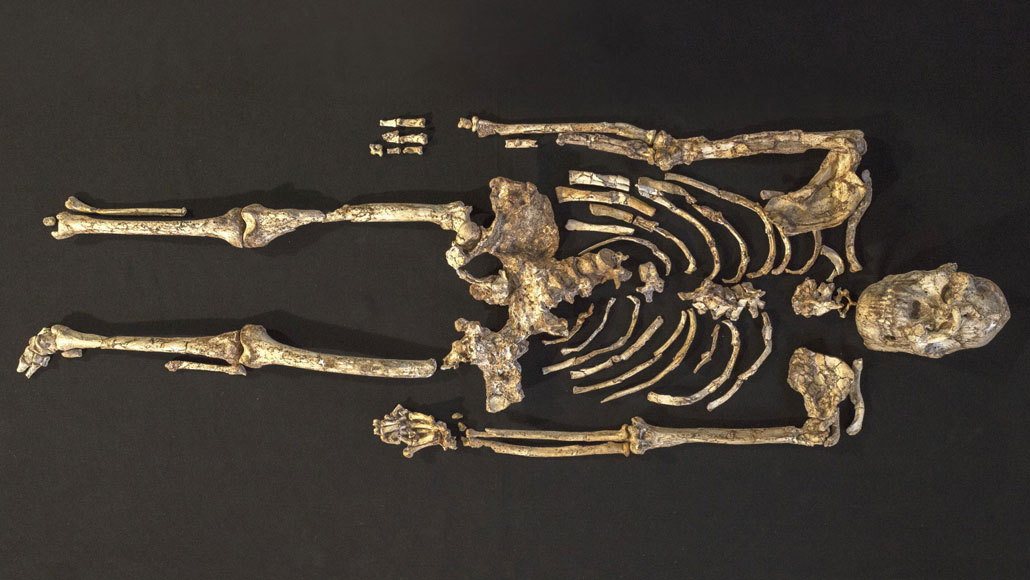 Little Foot hominid skeleton photographed from above