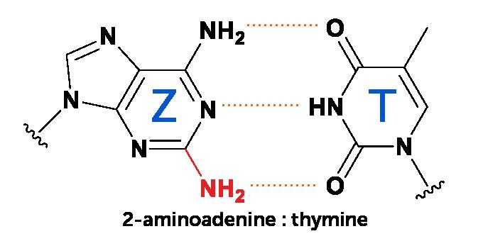 Diagrama de la unión de la base de ADN 2-aminoadenina a la timina