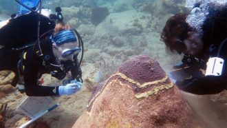 divers testing coral disease treatments