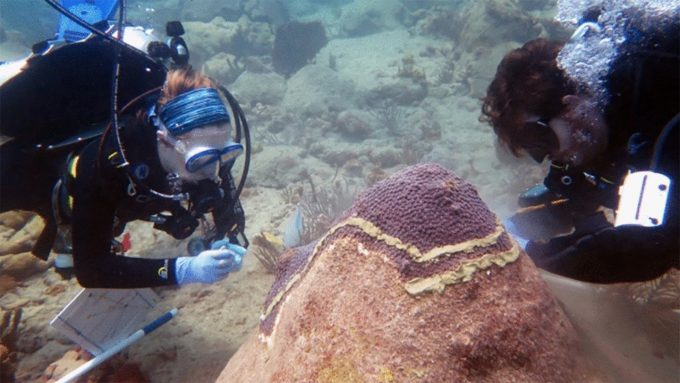 divers testing coral disease treatments