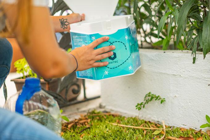 Persona sosteniendo una caja que contiene huevos de mosquitos modificados.